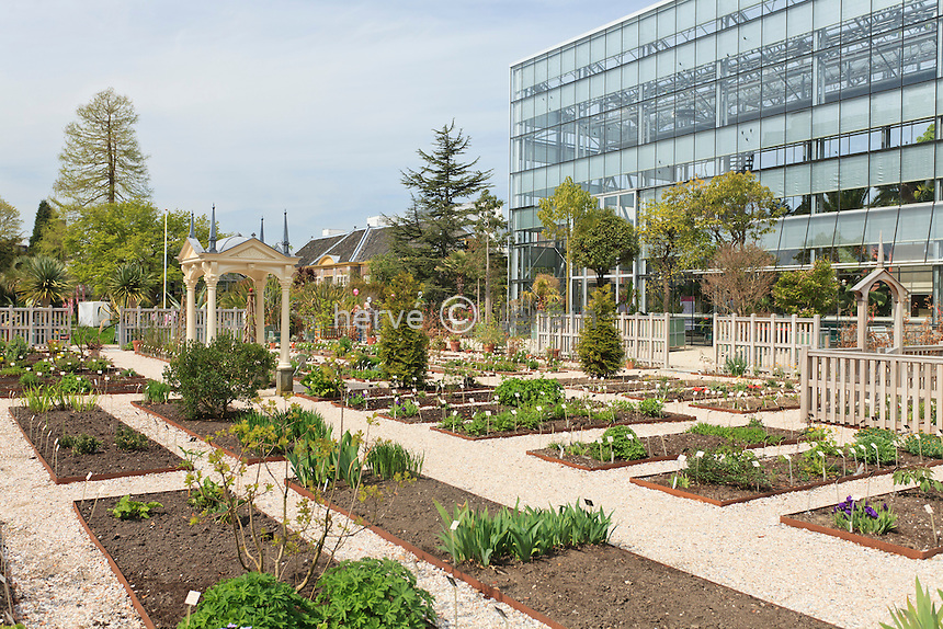 Hollande, Leyde, Hortus Botanicus, jardin botanique de l'Université de Leyde, il est le plus vieux jardin botanique des Pays-Bas  et un des plus vieux au monde, ici la partie apellée Le Jardin de Clusius où les première tulipes furent plantées en 1594 par  Carolus Clusius et la serre moderne // Holland, Leyden, Hortus Botanicus, botanical garden of the University of Leyden, this is the oldest botanical garden of the Netherlands and one of the oldest in the world, here the party call'd The Clusius Garden, this is a reconstruction of Clusius' original garden where the first tulips were planted in 1594 by Carolus Clusius and back the modern greenhouse.