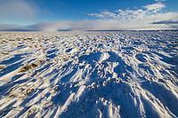 Zastrugi, wind blown snow over the tundra, Arctic, Alaska