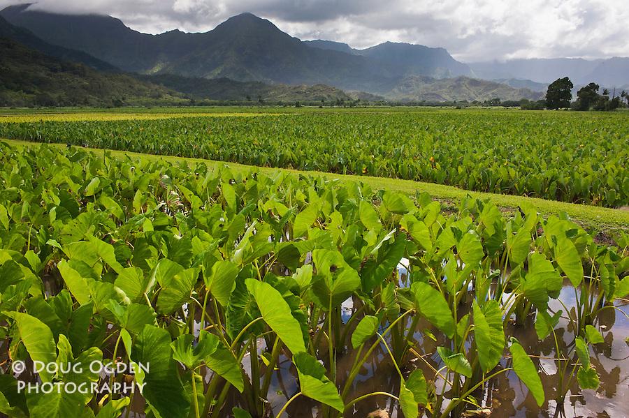 Taro fields near Hanalei, Kauai, Hawaii