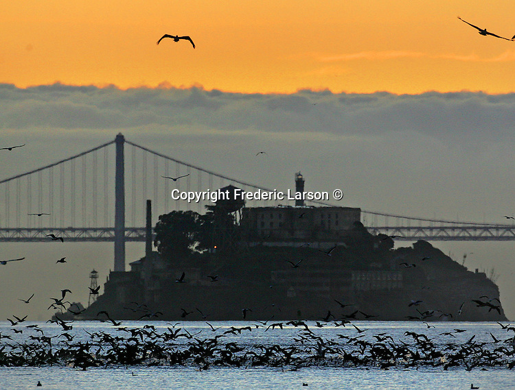 Thousands of birds feed off the bay as the sun was rising over Alcatraz Island in the San Francisco Bay, California.