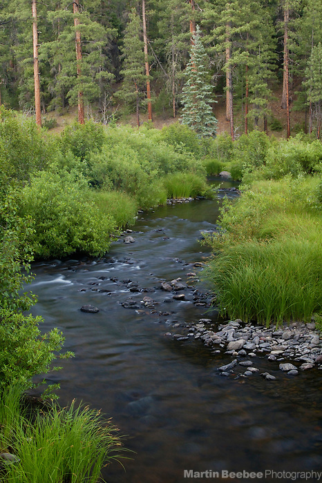 East Fork Black River, Apache-Sitgreaves National Forest, Arizona