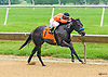 Prancing Warrior winning at Delaware Park on 6/5/2017