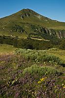 Europe/France/Auvergne/15/Cantal/Parc Naturel Régional des Volcans: Le massif du Puy Mary (1787 mètres)