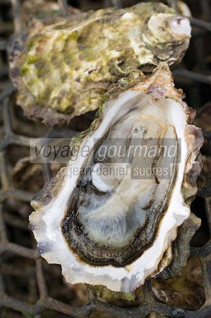 Europe/France/Aquitaine/33/Gironde/Bassin d'Arcachon/Ares: Avec Eric Dauges ostréiculteur sur les parcs à Huitres - Dégustation
