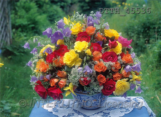 Helga, FLOWERS, portrait, macro, photos, divers roses, DTTH, DTTH45536,#F# Blumen, flores, retrato