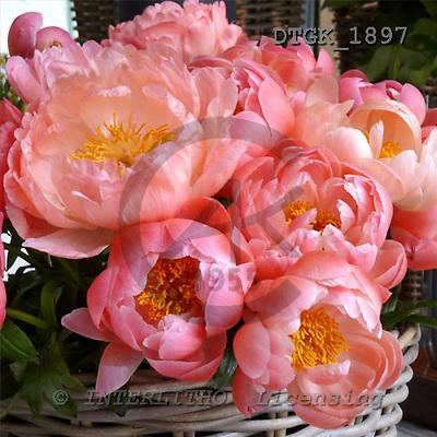 Gisela, FLOWERS, photos+++++,DTGK1897,#f# Blumen, flores, retrato