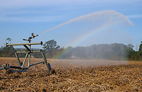 Irrigator gun spraying water over a crop of potatoes, Staffordshire with rainbow.