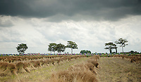 peloton passing flax fields (to make flax-carbon bikes with?)<br /> <br /> Eneco Tour 2013<br /> stage 1: Koksijde - Ardooie (175km)