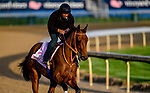 LOUISVILLE, KENTUCKY - APRIL 29: Motion Emotion , trained by Tom Van Berg, exercises in preparation for the Kentucky Oaks at Churchill Downs in Louisville, Kentucky on April 29, 2019. John Voorhees/Eclipse Sportswire/CSM
