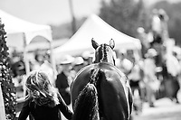 BEL-Lara de Liedekerke-Meier presents Alpaga d'Arville during the First Horse Inspection for the FEI World Team and Individual Eventing Championship. 2018 FEI World Equestrian Games Tryon. Wednesday 12 September. Copyright Photo: Libby Law Photography