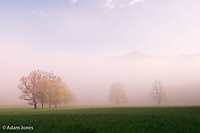 Trees in foggy meadow and distant Rich Mountain<br /> Cades Cove<br /> Great Smoky Mountains N.P. TN
