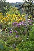 Mature herbaceous border at Great Dixter