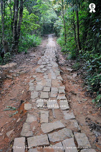 Pavement on trail in forest (Licence this image exclusively with Getty: http://www.gettyimages.com/detail/83154187 )
