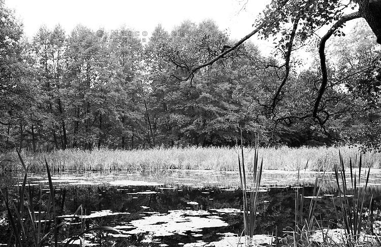 """Riserva naturale """"Feuchtwiesen Atterwasch"""", nella Bassa Lusazia, che rischia di essere cancellata dall'avanzare della vicina miniera di superficie Jänschwalde, per l'estrazione della lignite. Uno stagno --- Nature reserve """"Feuchtwiesen Atterwasch"""", in the Lower Lusatia, that risks to vanish because of the expansion of the nearby lignite surface mining of Jänschwalde. A pond"""