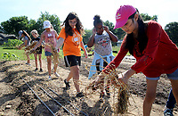 NWA Democrat-Gazette/DAVID GOTTSCHALK Milena Mendez (right), 10, places straw mulch over freshly planted squash seeds Wednesday, June 6, 2018, at the Apple Seeds Teaching Farm in Gulley Park, as she participates in the Food Ambassadors program at the farm in Fayetteville. The week long program provides the students with the skill, knowledge and resources in gardening, nutrition and cooking so they are prepared to take a leadership role at their schools.