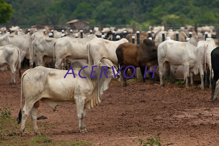 Fazenda da AgroExport para descanso de gado.Latitude :         2&deg;13'21.71&quot;SLongitude:   48&deg;47'14.06&quot;OMoj&uacute;, Par&aacute;, Brasil.Foto Paulo Santos<br /> 07/11/2013