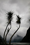 Cabbage tree and Mitre Peak under brooding sky, Milford Sound, New Zealand