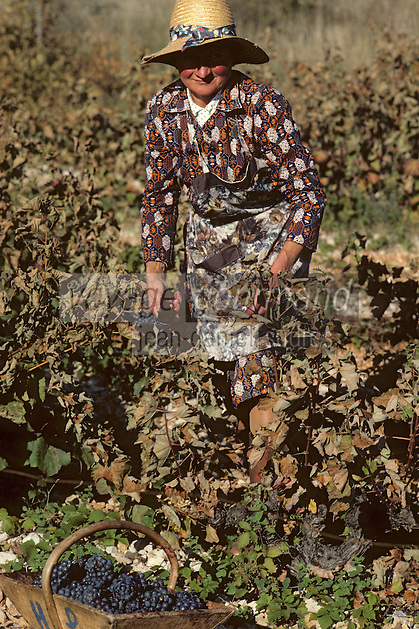 Europe/France/Midi-Pyrénées/46/Lot/Env. d'Esclauzels : Vignoble de Cahors - Vendangeuse [Non destiné à un usage publicitaire - Not intended for an advertising use]<br /> PHOTO D'ARCHIVES // ARCHIVAL IMAGES<br /> FRANCE 1980