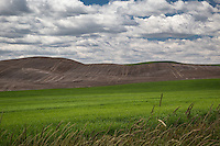 Rolling hills of the Palouse. The Palouse Is a region of where there are no continuous valleys, and the hills do not connect to make long ridges. These hills were not created by rivers and streams, as is most of our landscape, but formed more like sandunes, with winds depositing silt to form of some of the most fertile soil in the country.