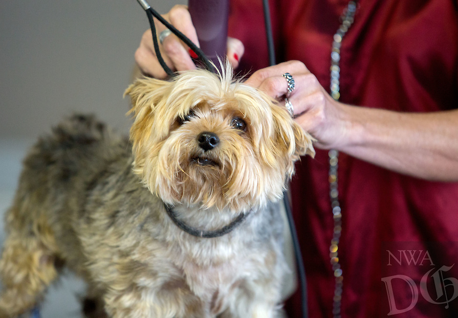 STAFF PHOTO JASON IVESTER --10/02/2014--<br /> Marlene Wright trims the hair on Sam, a yorkie, on Thursday, Oct. 2, 2014, inside Lisa Cabeldue's shop, Bone Jour Pet Salon, in Bentonville.