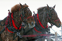 Close up of a team of horses pulling a sleigh through the snow.