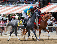 Gidu in the post parade as Promises Fulfilled (no. 1) wins the Allen Jerkens  Stakes (Grade 1), Aug. 25, 2018 at the Saratoga Race Course, Saratoga Springs, NY.  Ridden by  Luis Saez, and trained by Dale Romans, Promises Fulfilled finished 1 1/4 lengths in front of Seven Trumpets (No. 5).  (Bruce Dudek/Eclipse Sportswire)