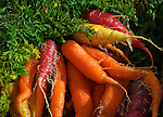 Bundle of fresh picked carrots, Central Coast, California