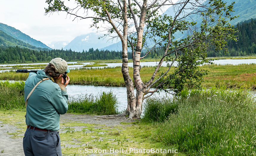 Photographer focusing on Betula papyrifera Birch tree at Turnagain Pass in Chugash National Forest on Kenai Peninsula, Alaska