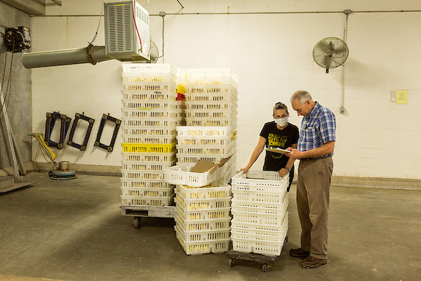 July 24, 2015. Candor, North Carolina.<br />  Hatchery manager Joe Steed checks with quality inspector Dianne Darnell as she counts the chicks before transport.<br />  Chicken producer Perdue Farms Inc. has become the first major poultry company to attempt to raise more than half of its flock with no antibiotics, human or for animals only. As demand for meats free of medicines has risen, Perdue has upgraded their facilities to increase cleanliness and sterility to allow the company to cut antibiotics out of the chicken hatching process.
