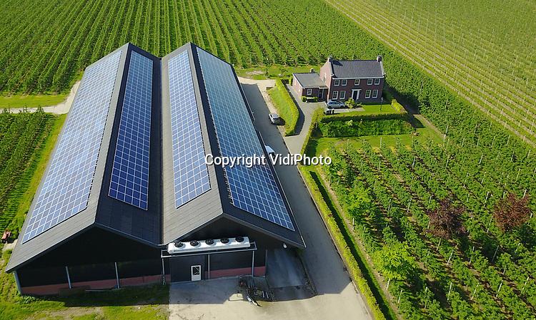 Foto: VidiPhoto<br /> <br /> KAPEL-AVEZAATH - Het fruitteeltbedrijf van Dirk en Saskia van Beusichem uit Kapel-Avezaath bij Tiel is volledig bedekt met zonnepanelen. Ze zijn daarmee niet alleen zelfvoorzienend, maar leveren ook electriciteit aan de omgeving.