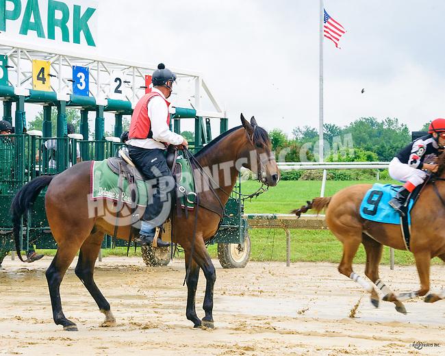Lance at Delaware Park on 6/16/16