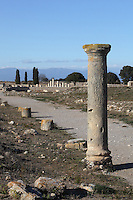 Cardo maximus, Roman city of  Empuries, 1st century BC - 1st century AD, Sant Marti d´Empuries, Girona, Spain. Picture by Manuel Cohen