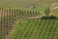 cascinale e filari, paesaggio agricolo a Portacomaro