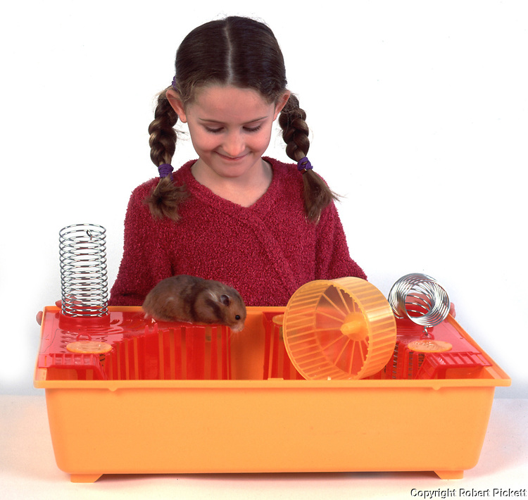Young girl, aged 9 years old, looking at hamster in cage with lid off, white background, studio, cut out, pet