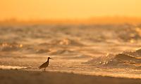 Sanibel Island, Florida: July 2014