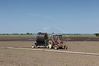 30.5.2020 Irrigating sugar beet in the Lincolnshire fens <br /> ©Tim Scrivener Photographer 07850 303986<br />      ....Covering Agriculture In The UK.