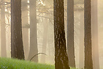 Ponderosa forest, Blue Mountains, Oregon