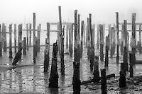 Pier pilings in fog