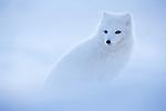 Svalbard Spring Special