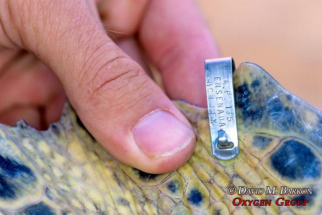 Flipper Tag On Turtle