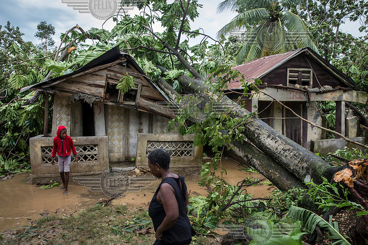 Houses in the coastal commune of Leogane damaged by trees brought down by Hurricane Matthew. Hurricane Matthew, the first category 5 Atlantic hurricane since 2007, hit the island on 4 October 2016. Winds of up to 230km/h (145mph) tore across the worst affected areas, mainly in the south of the island, killing around over 1,000 people and leaving hundreds of thousands in need of assistance.