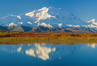 North Face Of 20, 3020+ Ft. Mt. Denali  Tundra And Reflection In Tundra Pond, Denali National Park, Alaska.