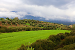 Scenic With Lush Green Fields