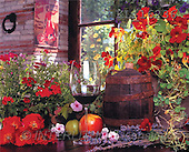 Interlitho, Alberto, STILL LIFES, photos, red flowers, wine(KL16236,#I#) Stilleben, naturaleza muerta