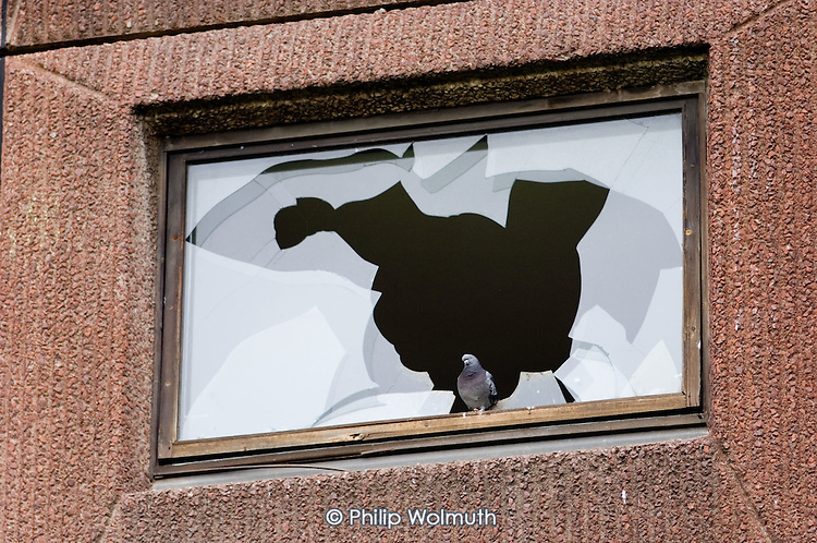 A pigeon sits in the broken window of an empty flat scheduled for demolition on the Stonebridge Estate, in the London Borough of Brent. The estate is managed by the Stonebridge Housing Action Trust (HAT).