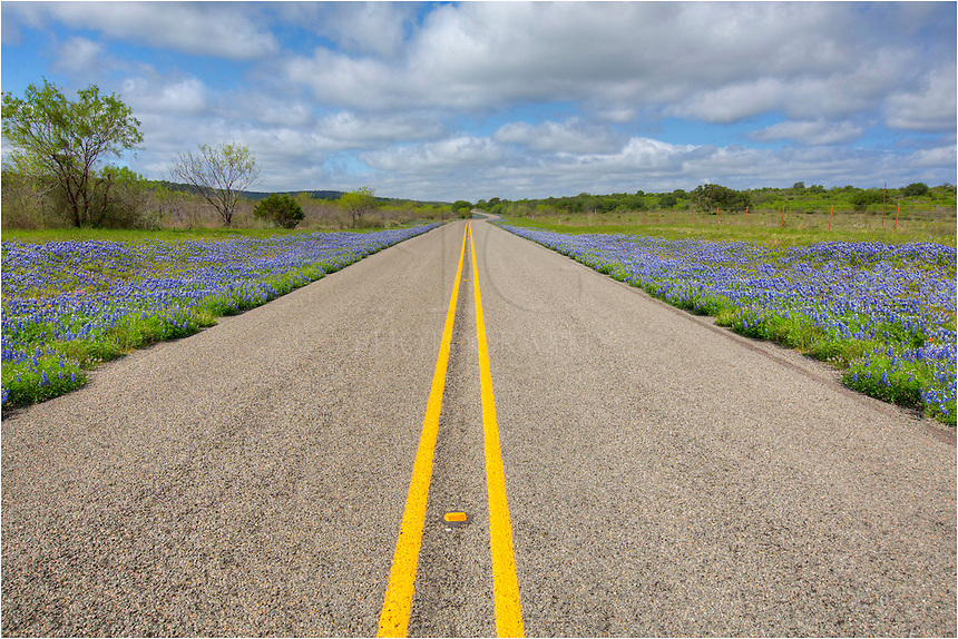In the Texas Hill Country, finding places to take images of buebonnets isn't hard in the spring. You just need a little time, a little sunlight, and a camera. This Texas Wildflower image comes from CR 3347 in southeast Llano County. I didn't see another car the whole time I was shooting this image. Bluebonnets, Indian Paintbrush, coreopsis, and many other Texas wildflowers were out, thought 2013 is shaping up to be a subpar year for color in the hill country.