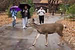 Mule Deer Crossing