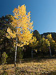 fall color in the Rocky Mountains, Estes Park, Colorado, USA