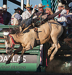 Austin Foss rides in the Bareback Bronc event during the Reno Rodeo in Reno, Nevada on Saturday, June 23, 2018.