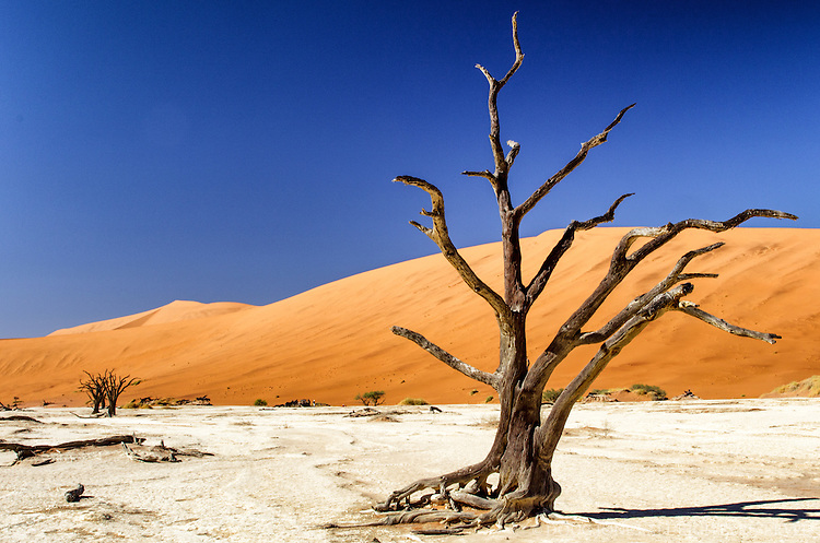At the Dead Vlei, Namibia